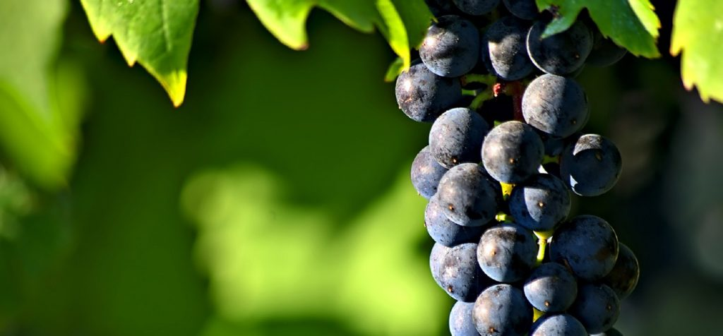 Native Wine Slovenia